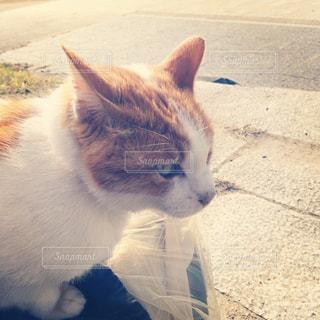 猫の写真・画像素材[312965]