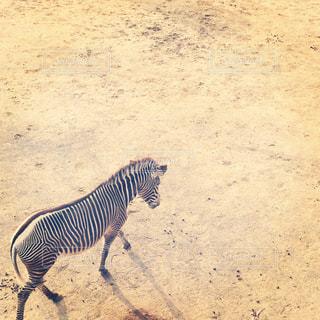 動物の写真・画像素材[312968]