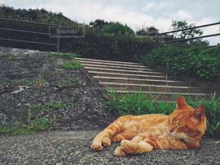 猫の写真・画像素材[312996]