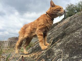 猫の写真・画像素材[312997]