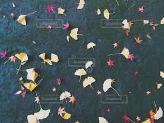 秋の写真・画像素材[313002]