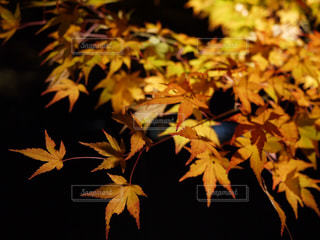 秋の写真・画像素材[313003]