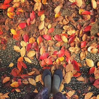 秋の写真・画像素材[314254]