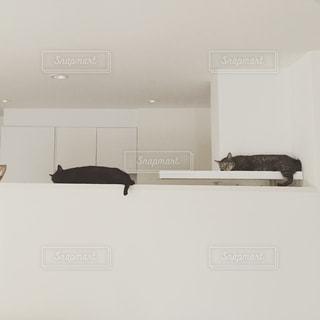 猫の写真・画像素材[314288]