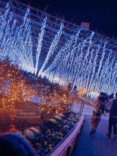 フラワーパーク、夜景の写真・画像素材[3100351]