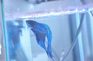 魚 - No.313282