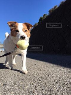 犬 - No.314314