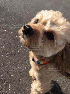 犬 - No.315004