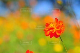 近くの花のアップ - No.762749