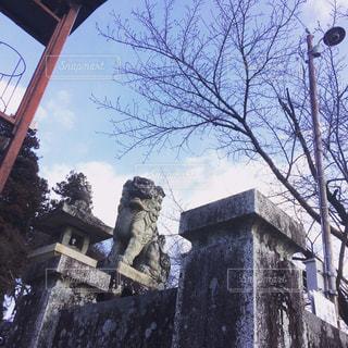 神社の写真・画像素材[313114]
