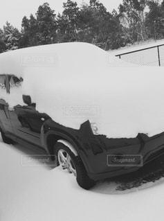 冬の写真・画像素材[313161]
