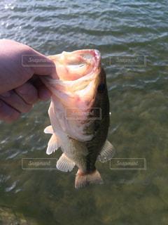No.313224 魚