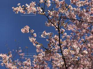 No.359397 春