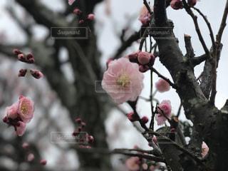 No.359400 春