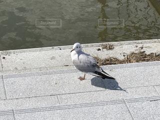 No.360895 鳥