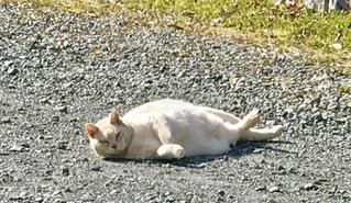 猫の写真・画像素材[363742]