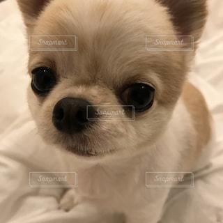 No.345082 犬