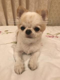 No.714167 犬