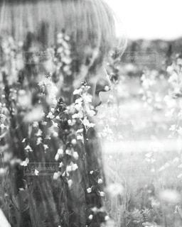 花の写真・画像素材[2659]