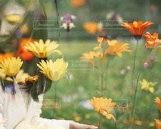 女性の写真・画像素材[2646]