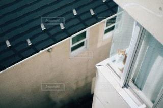 猫の写真・画像素材[2640]