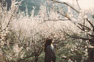 女性の写真・画像素材[2603]