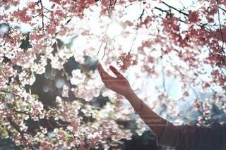 花の写真・画像素材[2600]