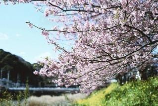 風景 - No.2567