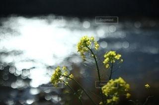 自然の写真・画像素材[2538]