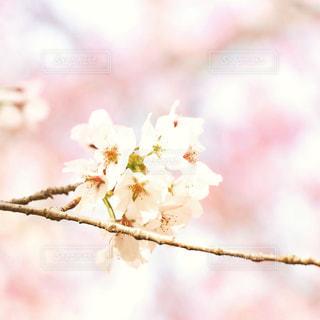 近くの花のアップの写真・画像素材[784935]