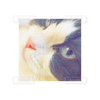 猫の写真・画像素材[314223]