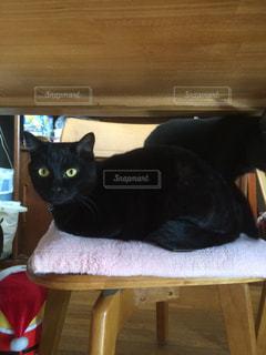 猫の写真・画像素材[313583]