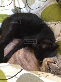 猫の写真・画像素材[313590]