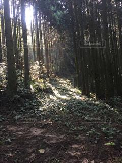 森 山 自然 光 神秘の写真・画像素材[314276]