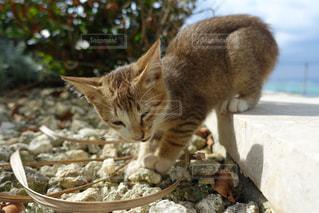 猫の写真・画像素材[314052]