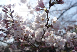 春の写真・画像素材[314104]