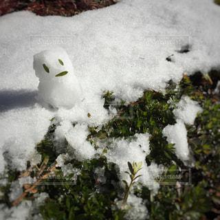 冬の写真・画像素材[314089]