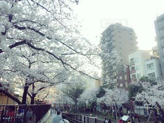 春 - No.315446