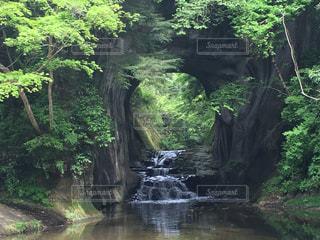 自然の写真・画像素材[563650]