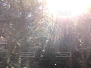 森の写真・画像素材[314495]