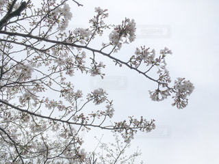 春 - No.417846