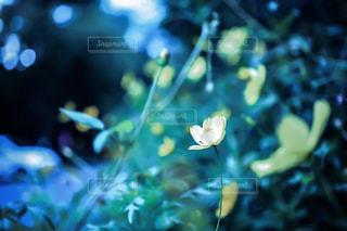 自然の写真・画像素材[314405]