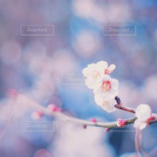 花の写真・画像素材[314413]