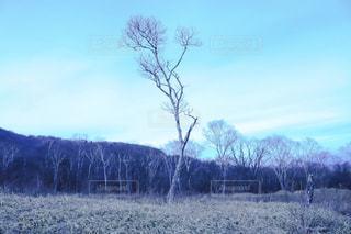 自然の写真・画像素材[314483]