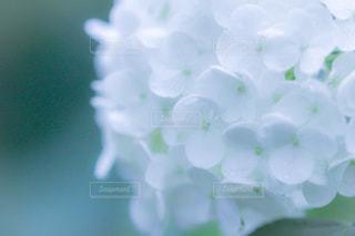 自然の写真・画像素材[314549]
