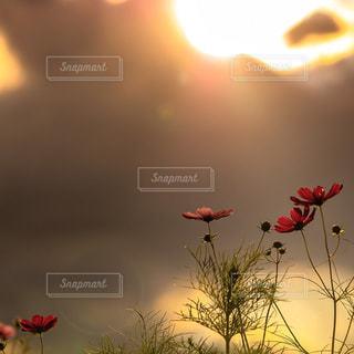 自然の写真・画像素材[314551]