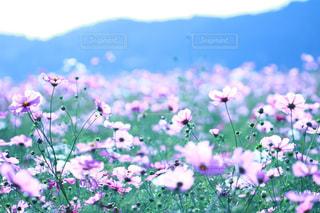 花の写真・画像素材[315336]
