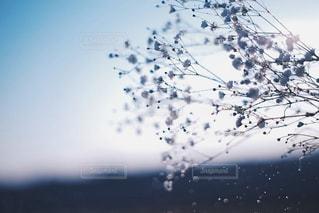 花の写真・画像素材[315337]