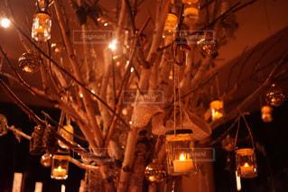 クリスマスツリーの写真・画像素材[817080]