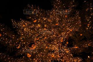 森の中のクリスマス ツリーの写真・画像素材[868087]